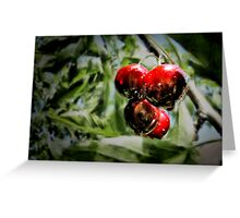 Some cherries Greeting Card