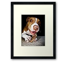A Dog And His Bone Framed Print
