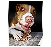 A Dog And His Bone Poster