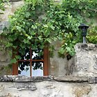 vine window by Fran E.