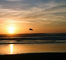 Gliding through the sunset by PhotosbyTerrell