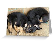 Kelpie Puppies Greeting Card