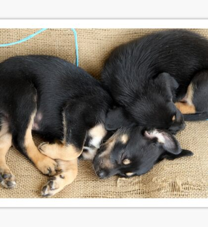 Kelpie Puppies Sticker