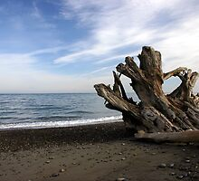 Washed up on the spit by PhotosbyTerrell