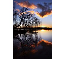 Mannum willows Photographic Print