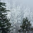 Snowing in the Forest # 2 by OrPhotoJohn