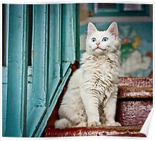 Blue-eyed white cat in an old wooden porch. Poster