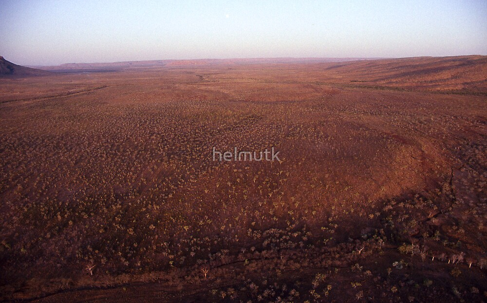 1000 Trees by helmutk