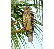 tropical  predator Photographic Print