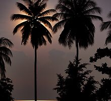 Twin Palms by Dave Lloyd