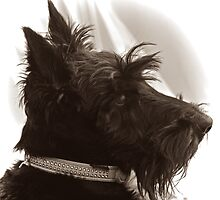 Scottie Dog: Paddy the 'Rescue' by Mikhail31
