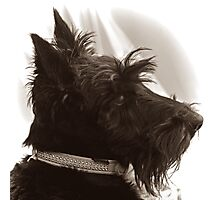 Scottie Dog: Paddy the 'Rescue' Photographic Print