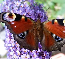 Butterfly on flower by franceslewis