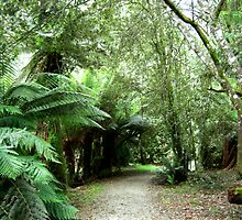 Fern Glade Reserve by JuliaWright