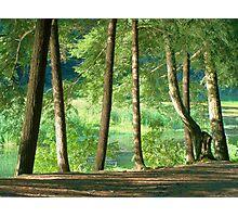 Shoreline Trees Photographic Print