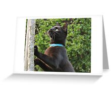 Black cat stretch Greeting Card