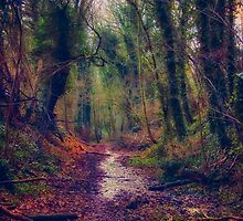 Wet and Wild Woods by Vicki Field