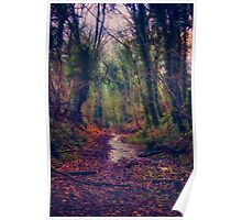Wet and Wild Woods Poster