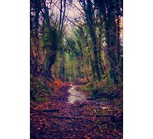 Wet and Wild Woods Photographic Print