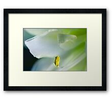 Relumed With Life Framed Print