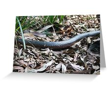 I'm Going Red-Bellied Black Snake(Pseudechis porphyriacus)  Greeting Card