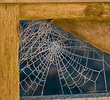 Frozen Cobwebs by Ashley Beolens