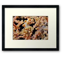 Pretty Pygmy Framed Print