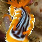Nudi Night by MattTworkowski