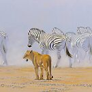 Lion and Zebra - South West Africa by defineart