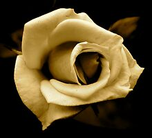 Rose by any other name... in sepia by newbeltane