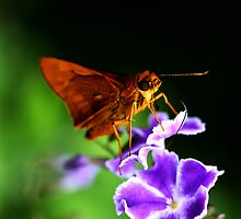 Brown Butterfly by Carly Chapman