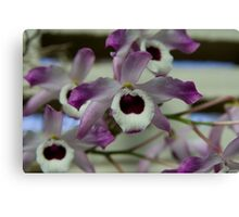 Cooktown Orchids? Canvas Print