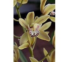 Mums Orchid Photographic Print
