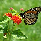 Monarch on Lantana by Caren Grant