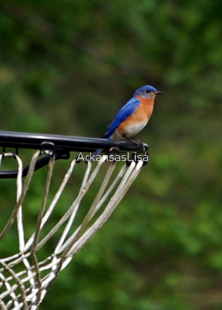 Hoops Anyone? by ArkansasLisa