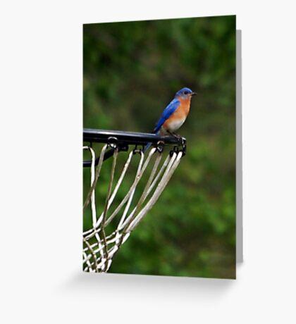 Hoops Anyone? Greeting Card