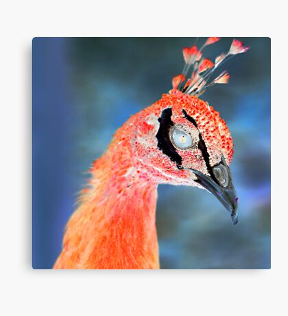 Inverted Peacock Canvas Print