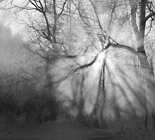 Misty, moiesty morning - photography by Paul Davenport