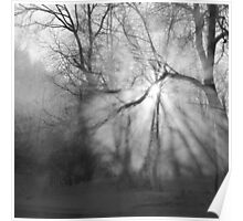 Misty, moiesty morning - photography Poster