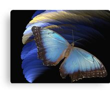 Butterfly's last adventure Canvas Print