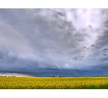 Canola on Stormy Plain Photographic Print