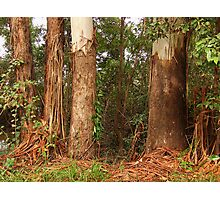 """Ribbon Gums"" Photographic Print"