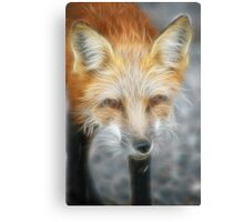 Sly Fox Canvas Print