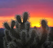 jumping cholla by gabe2007