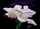 Single White Rose by Jim Phillips