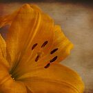Yellow Lilium flower with texture overlay by eddiej
