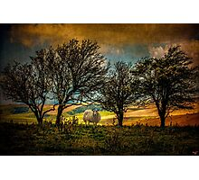 Up On The Sussex Downs Photographic Print