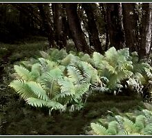 Ostrich Ferns in Langdon Park by Wayne King