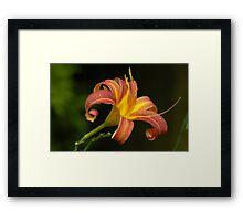Tiger Lilly - profile Framed Print