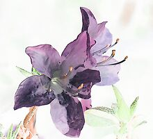 Azalea by George Petrovsky